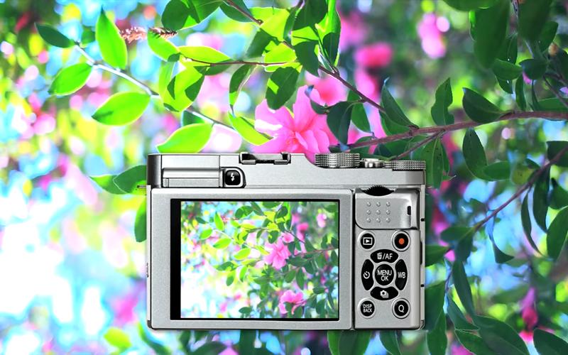 chất lượng hình ảnh tuyệt vời của máy ảnh không gương lật