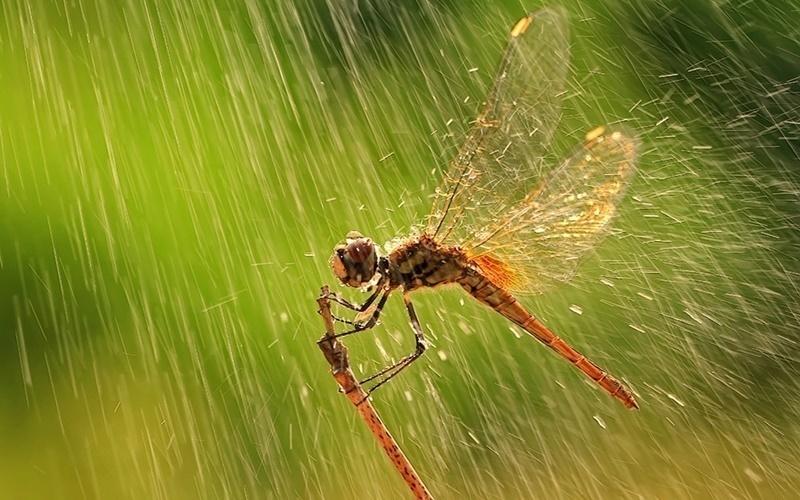 Chuồn chuồn ngộ nghĩnh tìm nơi trú mưa