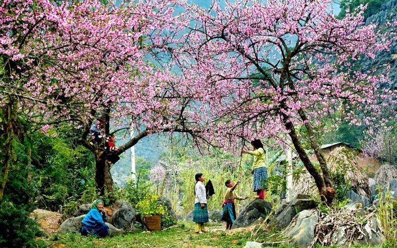 Mùa hoa đào hồng thắm ở Hà Giang