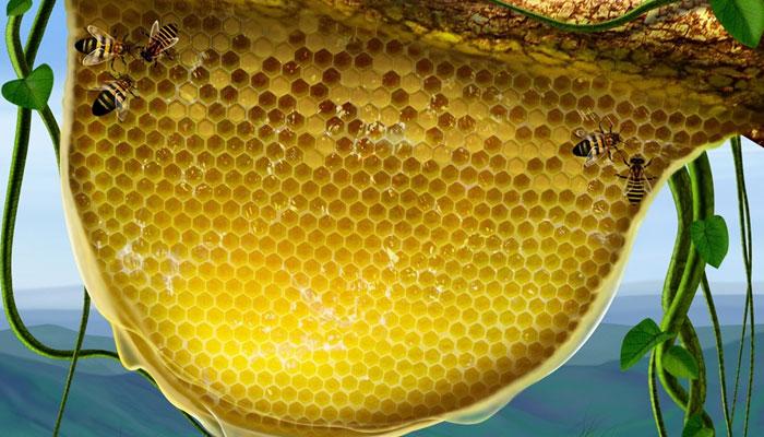 Tổ ong bạn đốt cho chúng thành than. Tiếp đến đặt vào trong chén và cất vào tủ lạnh. Tủ sẽ hết mùi sau 1, 2 ngày.