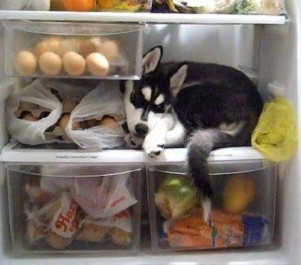 """Nóng như thế này, chiếm tủ lạnh của """"con sen"""" làm chỗ nghĩ trưa thôi!"""