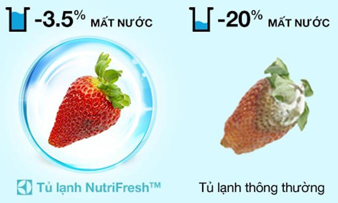 Tủ lạnh Electrolux 320 lít ETB3200BG duy trì độ tươi ngon của thực phẩm