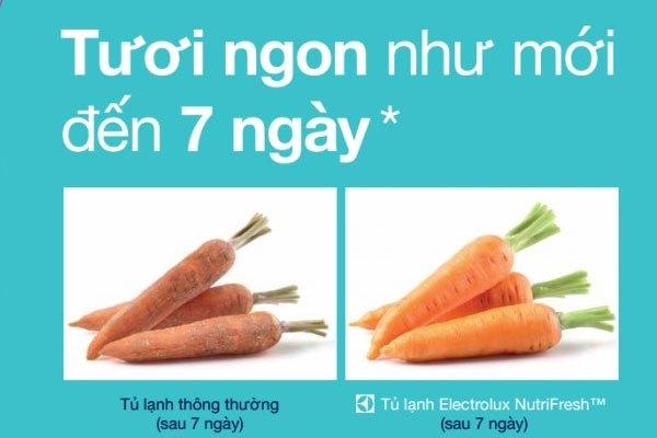 Bảo quản thực phẩm tươi ngon hơn 7 ngày vớitủ lạnh Electrolux EHE5220AA 474 lítđược trang bị hệ thốnglàm lạnh NutriFresh & FreshPlus