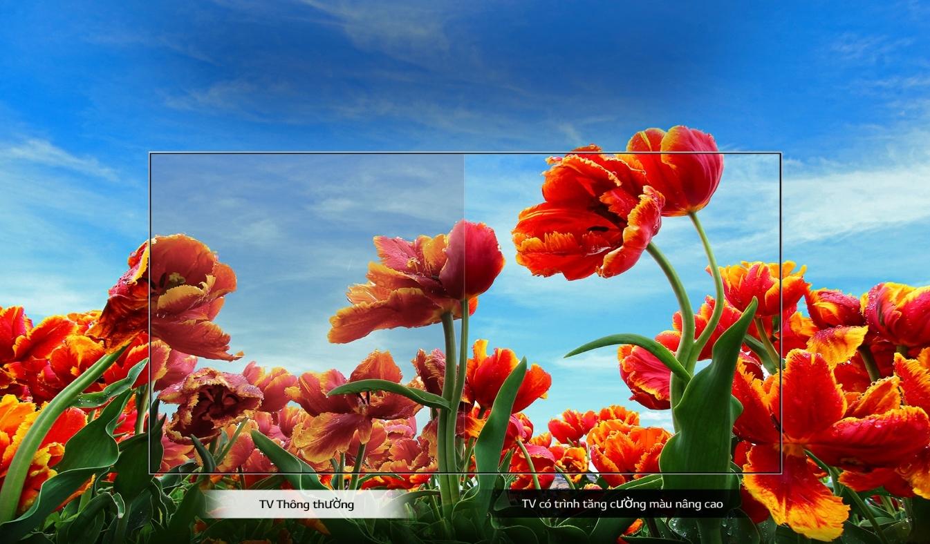 Smart Tivi LG 43 inch 43LM6360PTB - Trình tăng cường màu động, trải nghiệm hình ảnh sắc nét