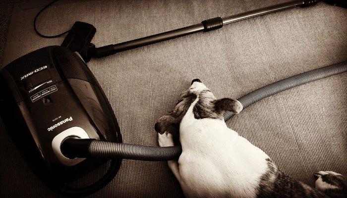 Hãy dùng máy hút bụi làm sạch nơi thú cưng thường nằm