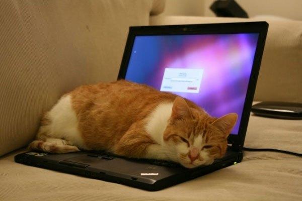 Biết tác hại cho laptop rồi bạn còn thấy cảnh tượng này dễ thương nữa không?