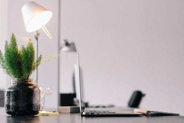 Nhìn chậu cây khi dùng laptop thời gian dài cũng là cách để bạn giảm mệt mỏi cho mắt đấy!