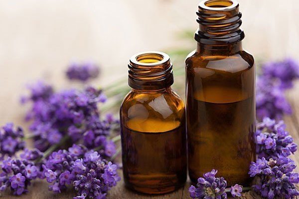 Tinh dầu oải hương giúp đuổi muỗi hiệu quả