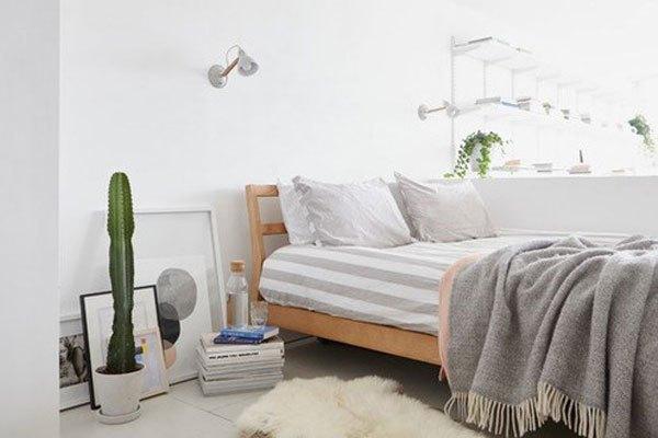 Đặt xương rồng trong phòng ngủ giúp hấp thụ bức xạ từ điện thoại