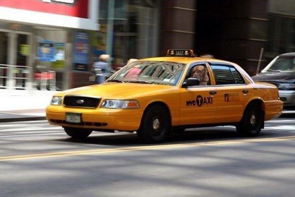 Đi taxi tặng luôn người lái. Mại dô, mại dô!
