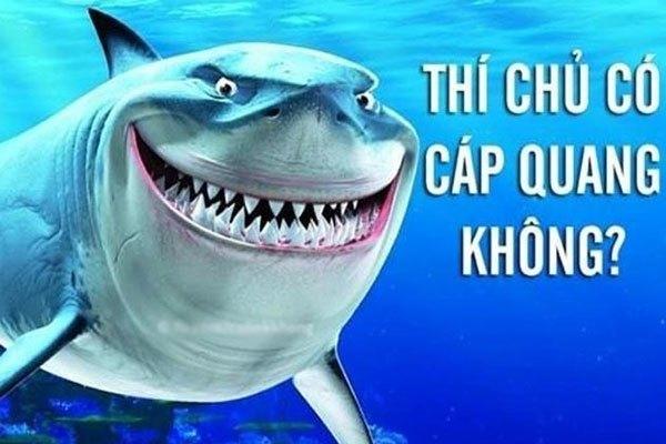 """Liệu có phải do cá mập đã """"xử"""" những tuyến cáp quang kia chăng?"""