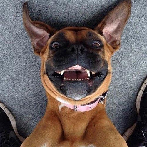 Móc điện thoại ra selfie phát chào ngày mới đi anh em