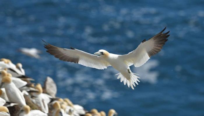 Chú chim chân thật đến từng chi tiết khi chụp bằng máy ảnh Nikon D850