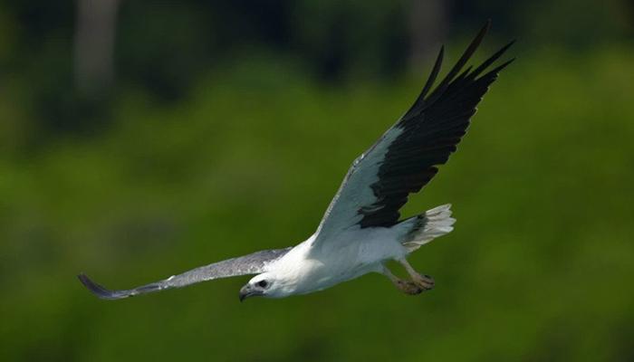 Cảnh đáp xuống của chú chim khi chụp bằng máy ảnh Nikon D850