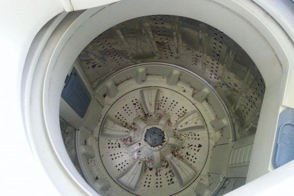 Máy giặt lâu ngày không vê sinh sẽ gây bệnh
